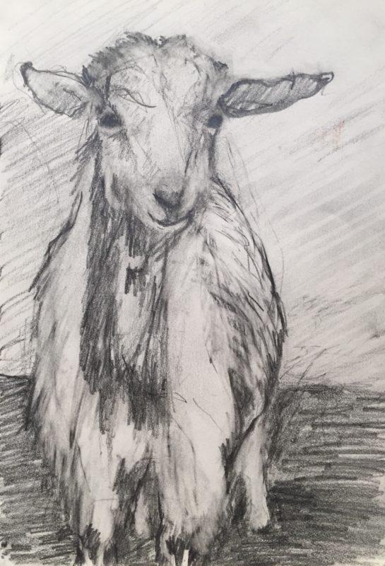 Watercolor & Drawing Classes | Center Sandwich Fine Craft